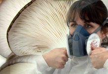 mantarhane maskesi ve filtresi 3m polen spor
