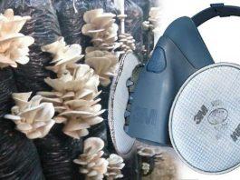 Mantar sporlarından, tozundan zehirinden zararından poleninden koruyan en uygun gaz maskesi ve filtresi